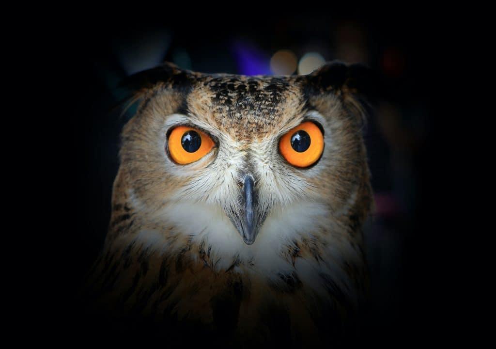 Eyes of Eagle Owl on dark background.