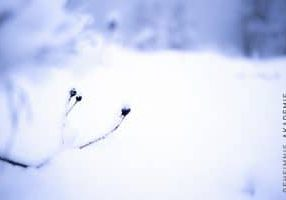 Imbolc Stimmung Schnee